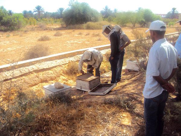 tunisie_aout2012_3.jpg